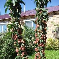 И такие яблоньки бывают :: Лариса Рогова