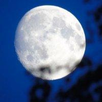 Луна и ветви... :: Анатолий Антонов