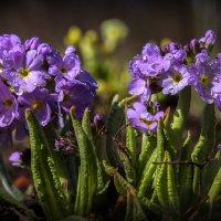 Была весна.., надеюсь снова будет... :: Сергей В. Комаров