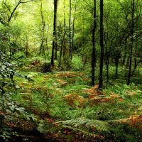 В лесу :: Alexander