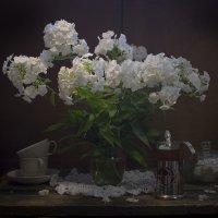 Флоксов аромат или на исходе лета. :: Оксана Евкодимова
