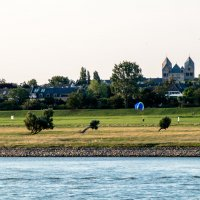 Левый берег Рейна :: Witalij Loewin