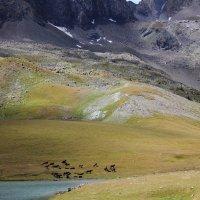 Северный кавказ .Хребет Абишира-ахуба :: Александра Пикина