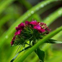 Цветик-семицветик :: Таня Пименова
