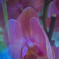 Орхидея :: ChernilaART .