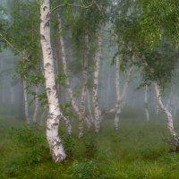 Утро :: Сергей Брагин