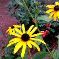 Летние цветы :: Oleg Ustinov