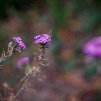 цветы :: Виктория Чуб
