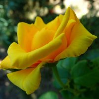 Профиль красавицы... :: Тамара (st.tamara)