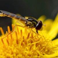 Жёлтая  на  жёлтом :: Геннадий С.