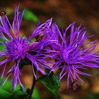 цветок :: Ксения Батенева