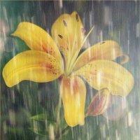 Солнечный дождь :: Serdechko (Лариса) Кальнина