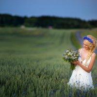 В поле на закате :: Татьяна Малюта