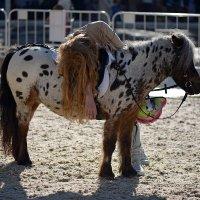 Как прекрасна девушка на коне. :: kirm2 .