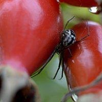 иногда даже маленькие пауки выглядят устрашающе... :: Irina Raizwoll