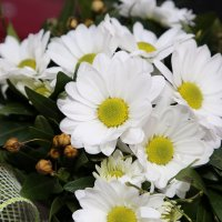 Цветочный хоровод-524. :: Руслан Грицунь