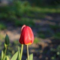 Цветочный хоровод-522. :: Руслан Грицунь