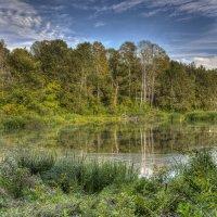 Лесное озерцо. :: Дмитрий С... .