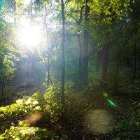 В лесу :: Дмитрий Долгов