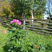 Цветок последнего дня лета :: Николай Туркин