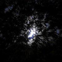 Ускользающая луна... :: Наталья Rosenwasser