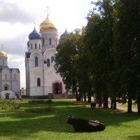 Священные коровки при Монастыре. :: Ольга Кривых