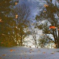 Отражение золотой поры :: Анна Харламова