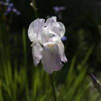 Цветочный хоровод-530. :: Руслан Грицунь