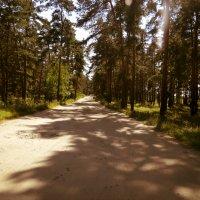The Road :: Maggie Aidan