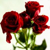 розы :: Алёна Петрова