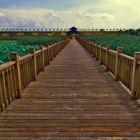 Озеро лотосов :: Жанетта Буланкина