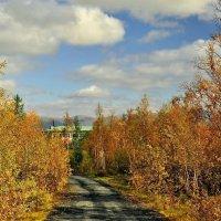 Осенняя дорожка :: Витас Бенета