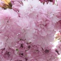 Цветочный хоровод-535. :: Руслан Грицунь