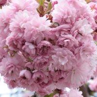 Цветочный хоровод-533. :: Руслан Грицунь