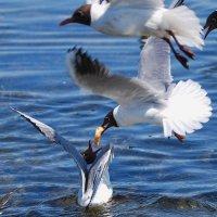 на лету :: linnud