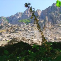 На фоне скал :: Андрей Р