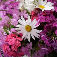 Цветы :: Angelika Faustova