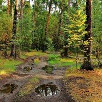 Пролился первый дождь осенний... :: Лесо-Вед (Баранов)