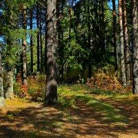 Подошла неслышно осень... :: Galina S*