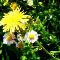 Цветок :: Илья Дублий