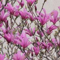 Цветочный хоровод-540. :: Руслан Грицунь