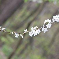 Цветочный хоровод-536. :: Руслан Грицунь