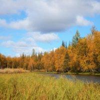 Уж осень близится... :: Александр Тихонов