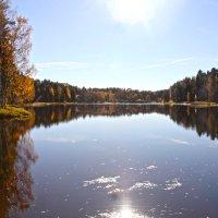 Озеро лесное :: Наталья
