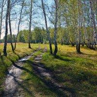 Осень  идёт :: Геннадий С.