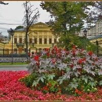 Москва цветущая :: Дмитрий Анцыферов