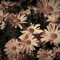 Цветы :: Андрей Гендин