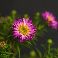 Этюд с цветком 1 :: Виталий