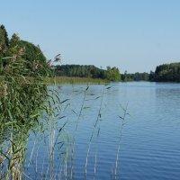 Озеро Селигер у дер. Заречье :: Елена Павлова (Смолова)