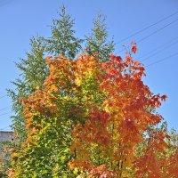 Яркие краски осени. :: Андрей Синицын